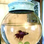 Bowl for a betta fish..Broken Swag….To Swanky Pad!
