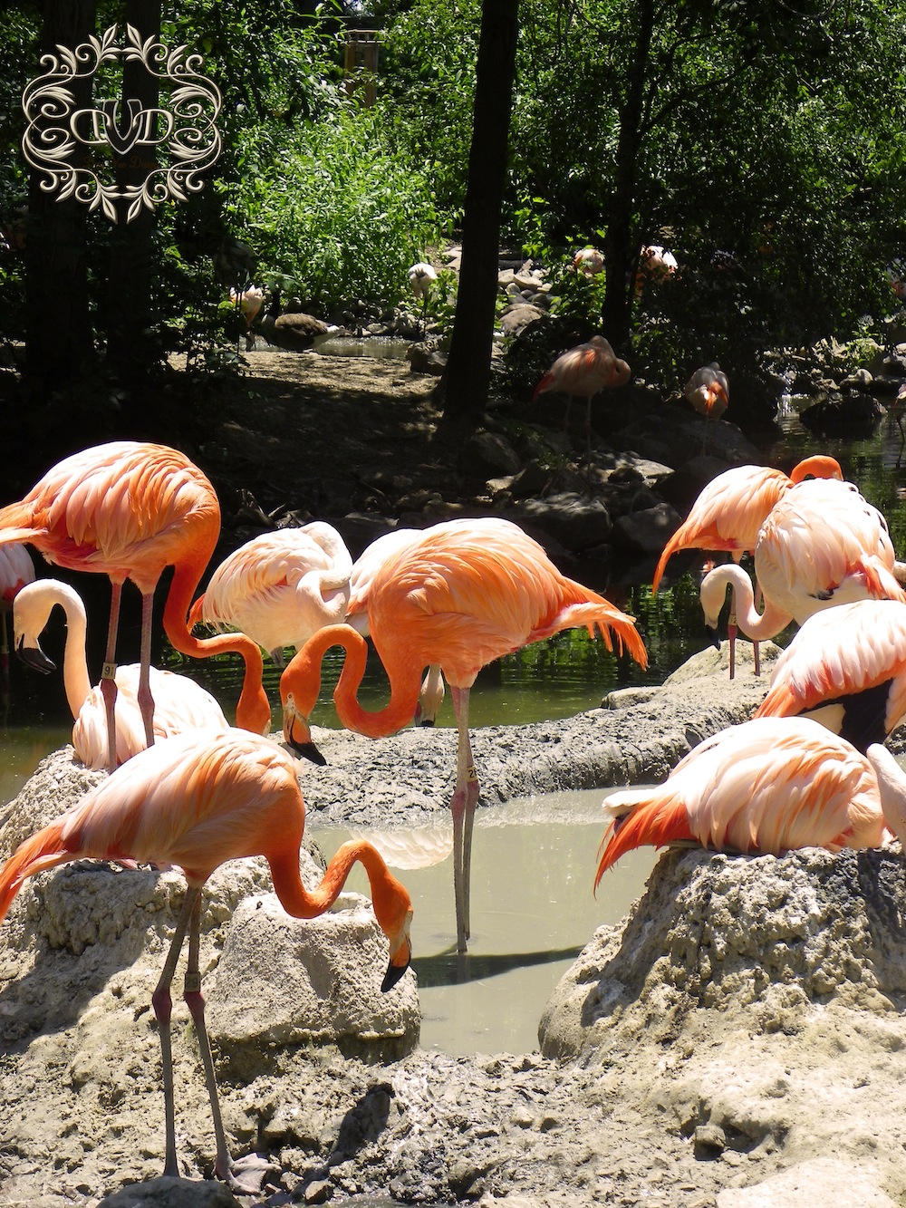 flamingos with back pain
