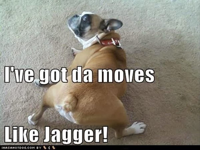 funny-dogs-3