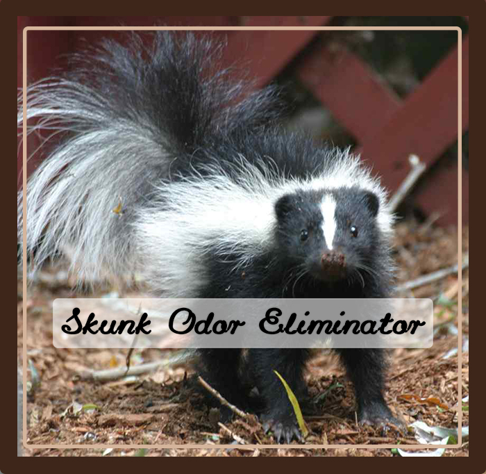 skunk odor elimination