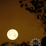 Moon (and spring) Swooning!