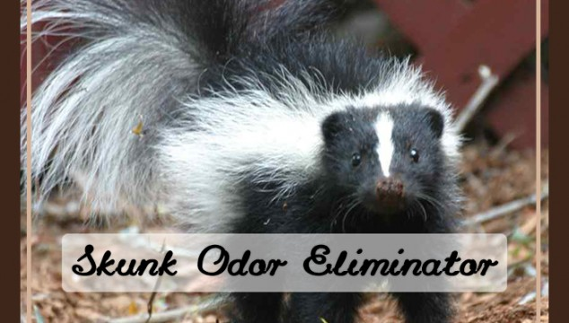 skunk odor elimination